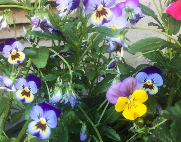outsider-flower
