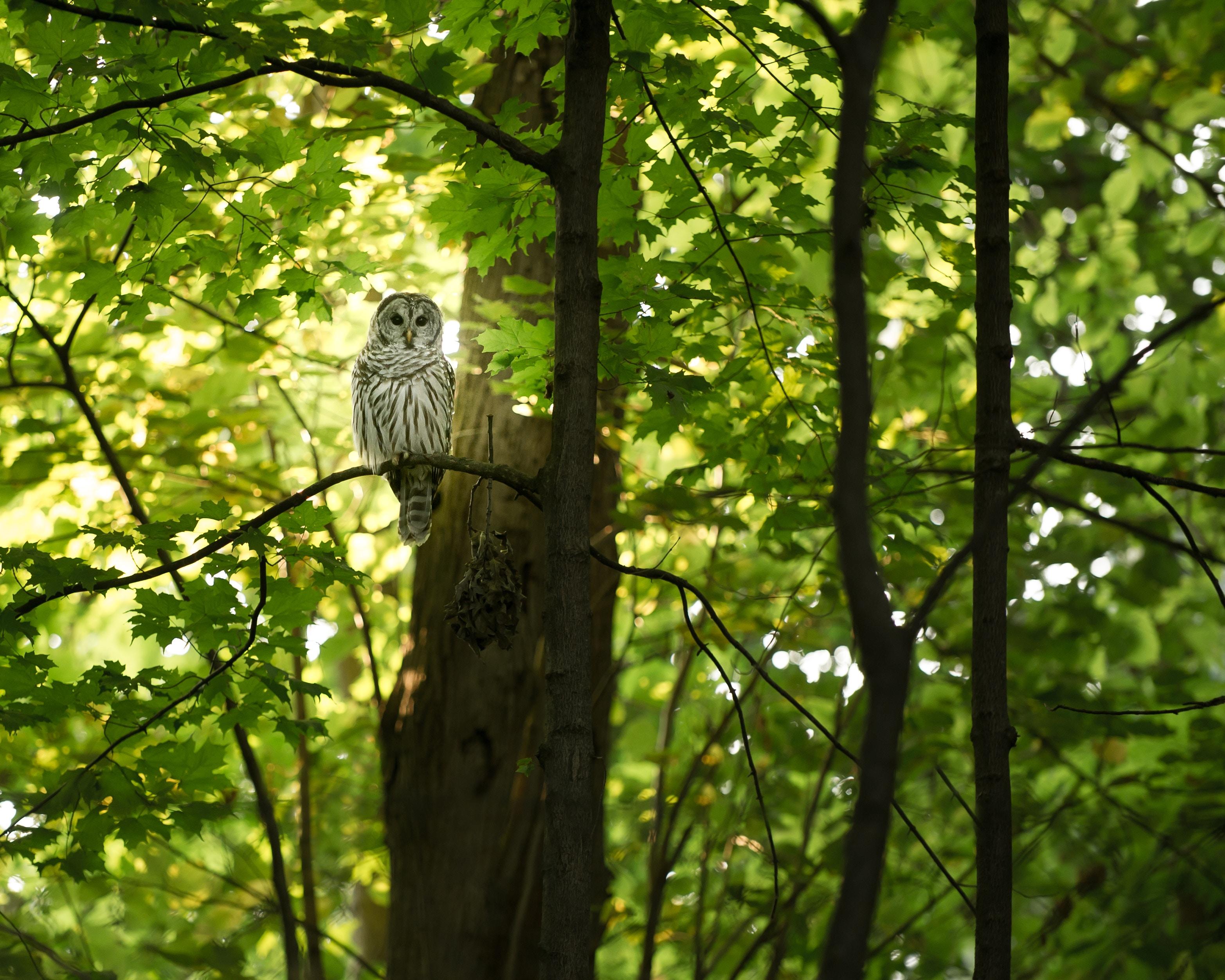 owls-belong-forest