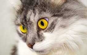 unhappy-cat-mindfulness