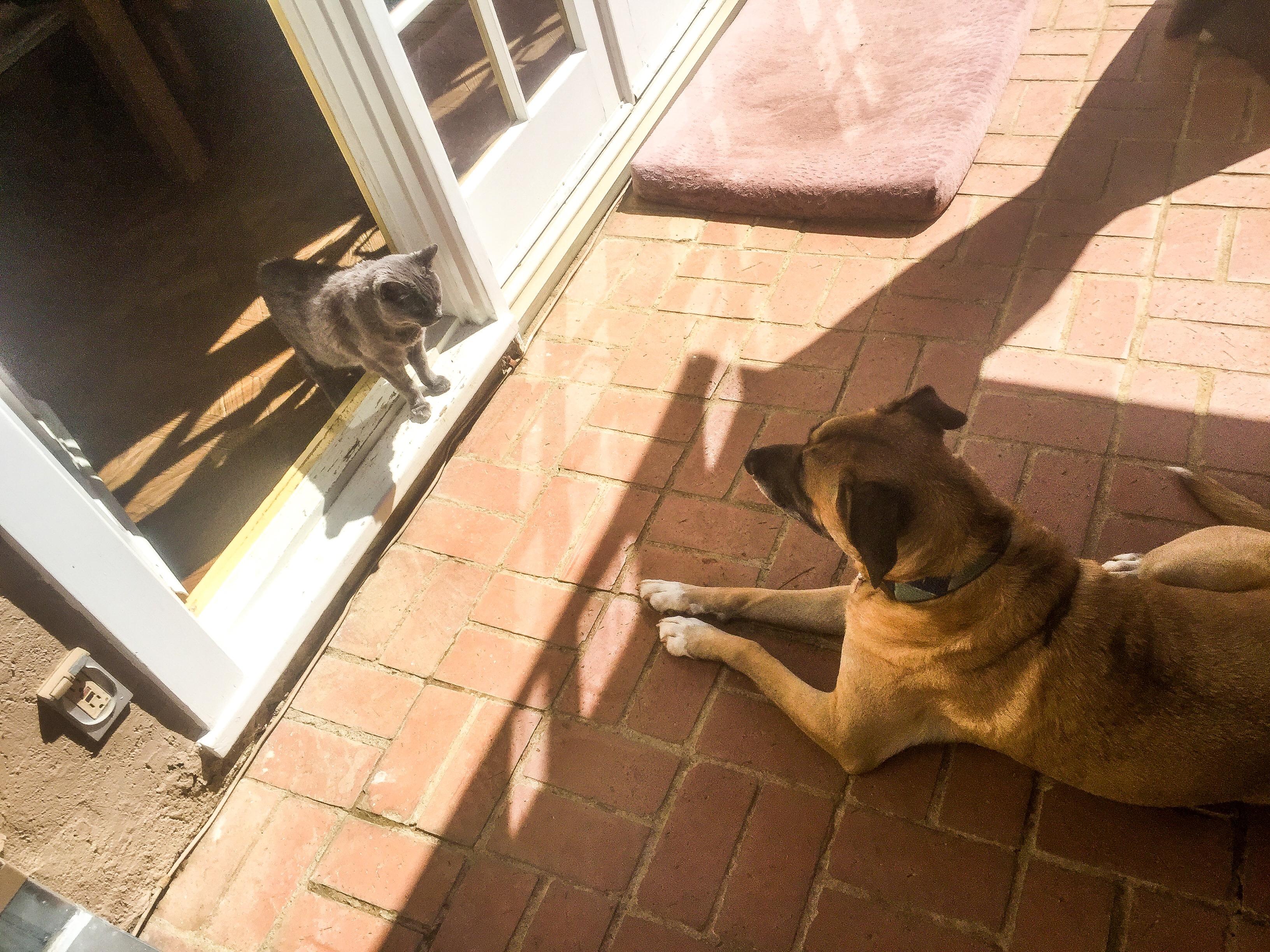 dog-cat-hollywood-rescueanimals-janne-kindberg