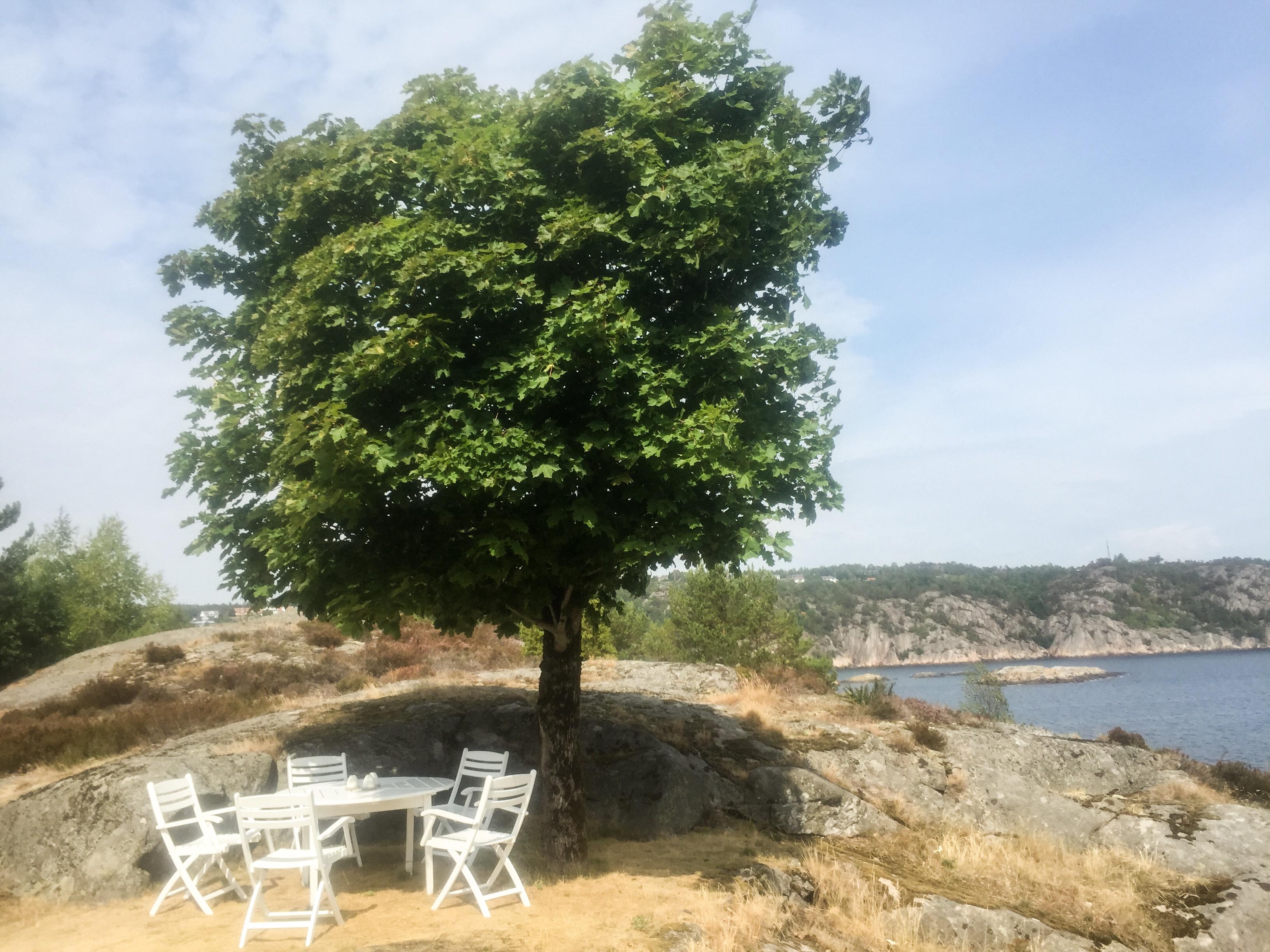 trær-natur-øy-john-donne-foto-bodil-fuhr