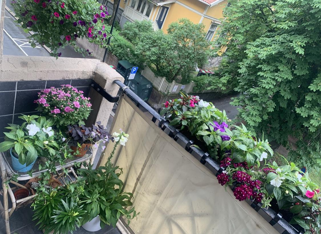 balcony-flowers-beauty
